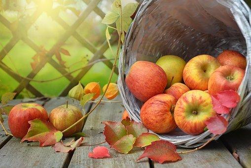 People = Fruit Basket